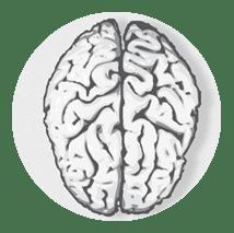 Corazon Neuroscience Program